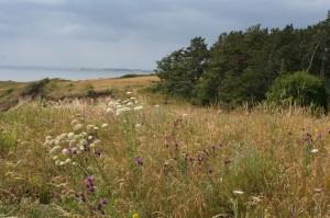 Traumhaft nordisch ─ Flitterwochen an der Nordsee